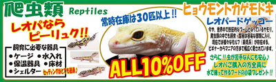 ウィンター爬虫類.jpg