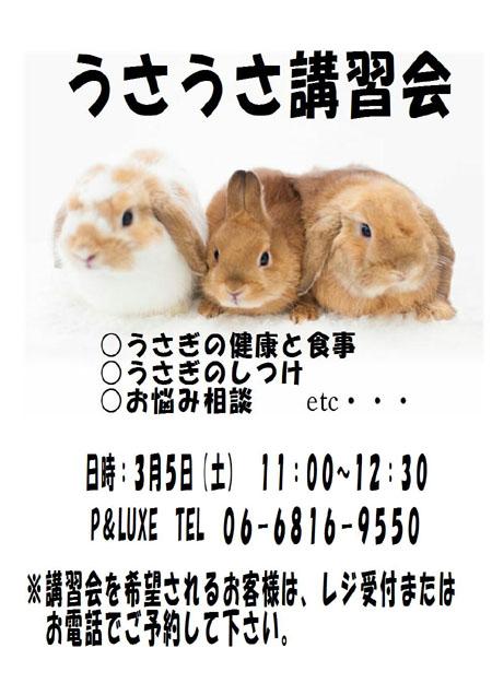 ウサウサ講習会.JPG