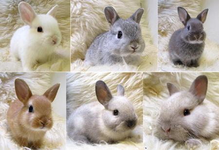 ウサギだらけ.JPG