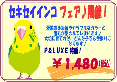 セキセイインコフェア.JPG