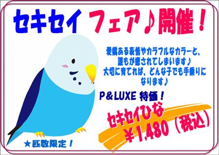 セキセイフェア.JPG