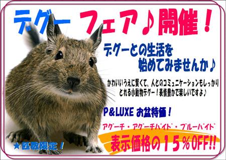 デグー - コピー.JPG