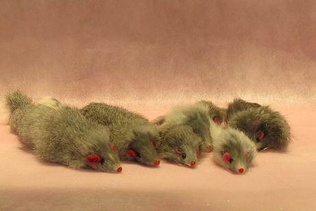ネズミたち.jpg