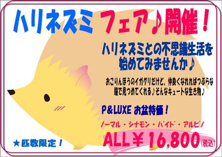 ハリネズミ - コピー.JPG