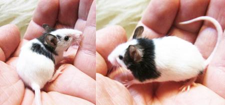 パンダマウス2枚.jpg