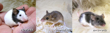 マウス3種2.JPG