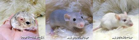 マウス3種3.JPG