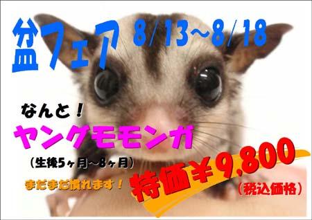 ヤングモモンガ12.JPG