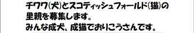 里親2.jpg