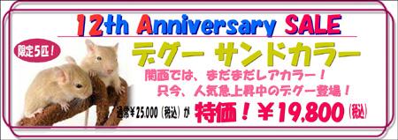 12周年祭デグーサンド.JPG