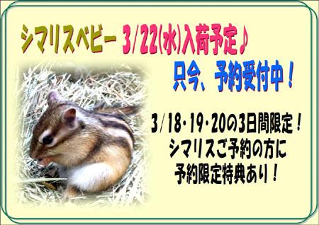 2017シマリス予約.JPG