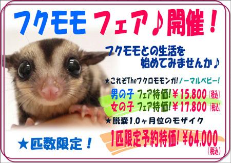 2018秋フクモモフェア.JPG