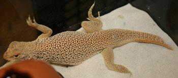 Lizard-2.jpg
