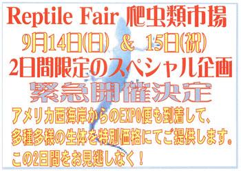 Reptile-Fair-08-2.jpg