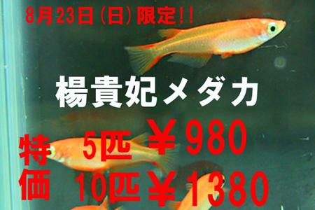 hyousi150822aq.jpg