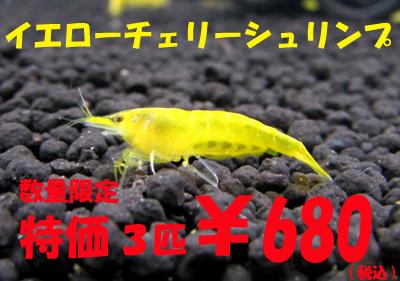 hyousi161125aq.jpg
