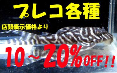 hyousi180126aq2.jpg