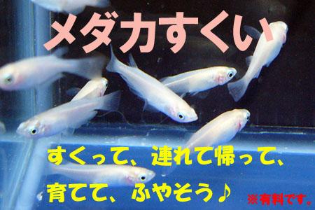 hyousimedakasukui.jpg