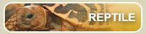 爬虫類(レプタイル)のペットをお探しの方、ペット用品をお探しの方への情報はこちら