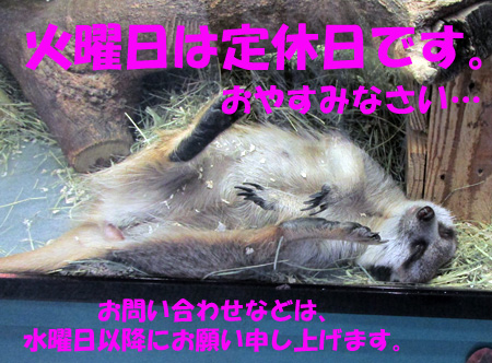 miaoyasumi.jpg